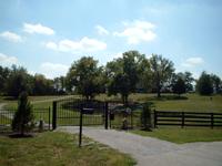 Estate Swing Single Gate
